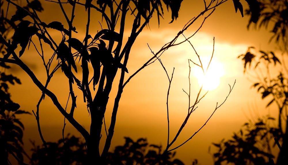 Sunset Gums